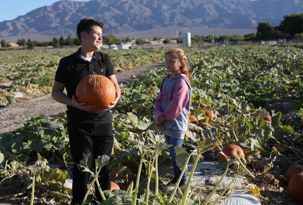 Luke Swasey, 11, picks pumpkins with his sister Ella Swasey, 9, at Gilcrease Orchard in Las Veg ...
