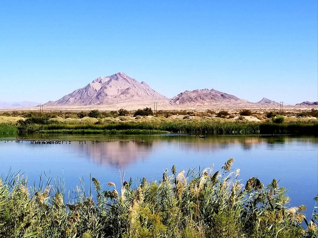 Mountains frame the horizon at Clark County Wetlands Park. (Natalie Burt)