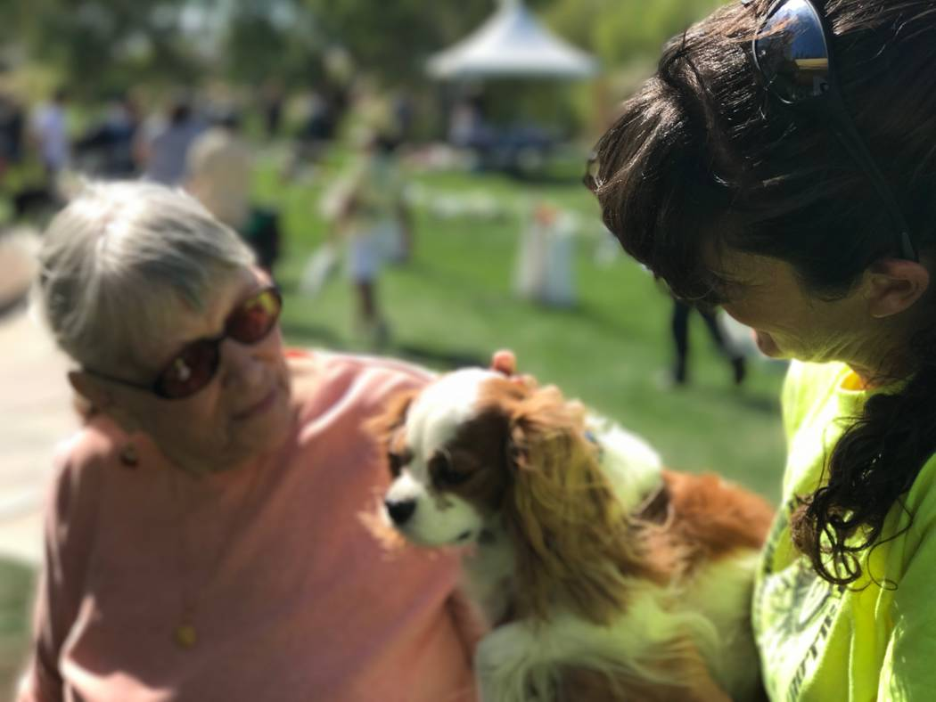 Celebrate your pet and help other animals in need at the Family, Fur & Festival at Mountain's ...