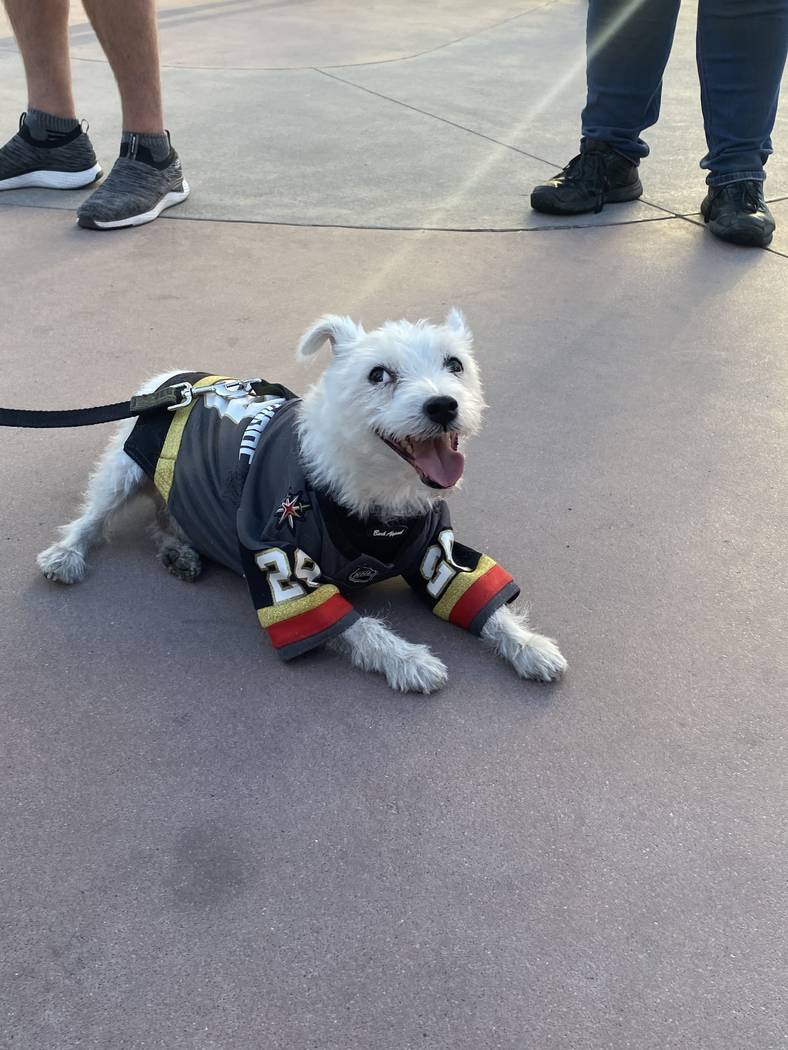 Vegas Golden Knight canine fave Bark-Andre Furry is shown at Toshiba Square outside T-Mobile Ar ...
