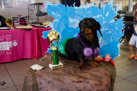"This dog was the ""Most Creative"" winner during the 2017 Pamper Your Pet Day at Chapman Chry ..."