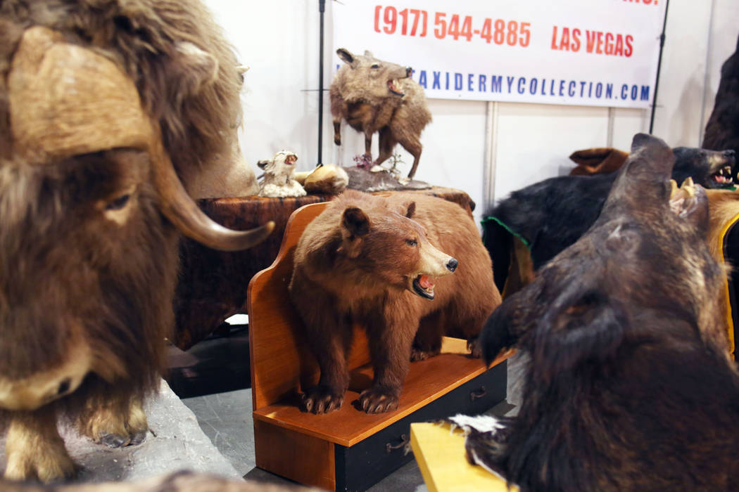 Items from a Las Vegas business, Taxidermy Collection, displayed during the preview of Big Boys ...