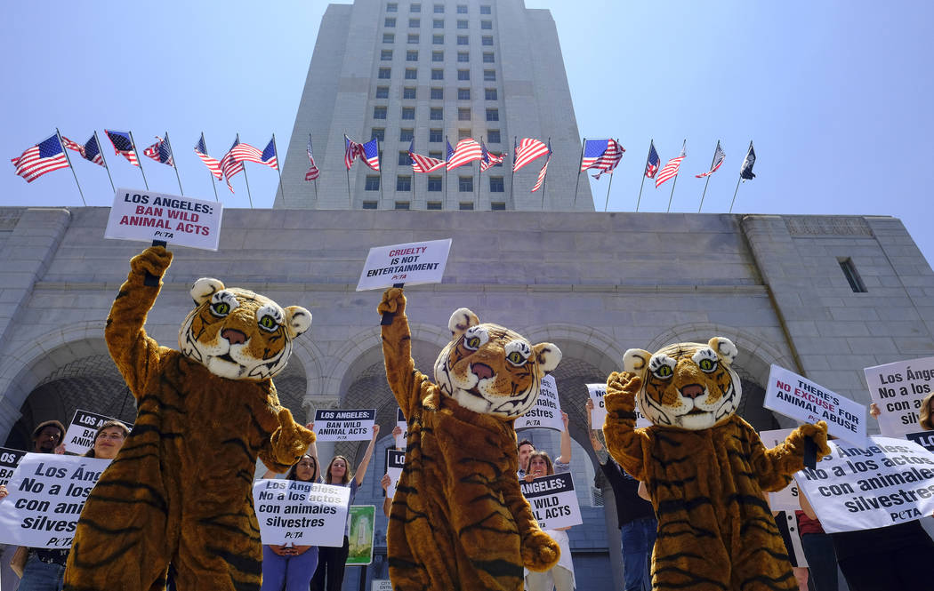FILE - In this July 7, 2016, file photo, led by three costumed tigers, dozens of animal rights ...