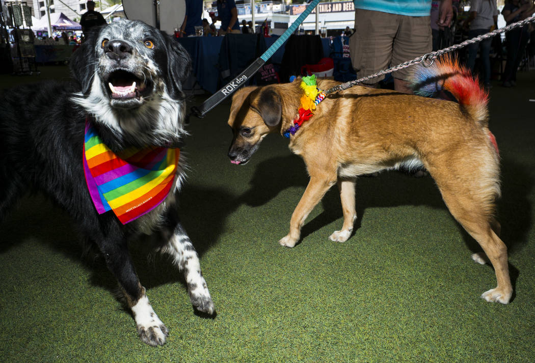 Pepper, left, and Oakleigh play around at the Pride Pets area of the Las Vegas Pride Festival i ...