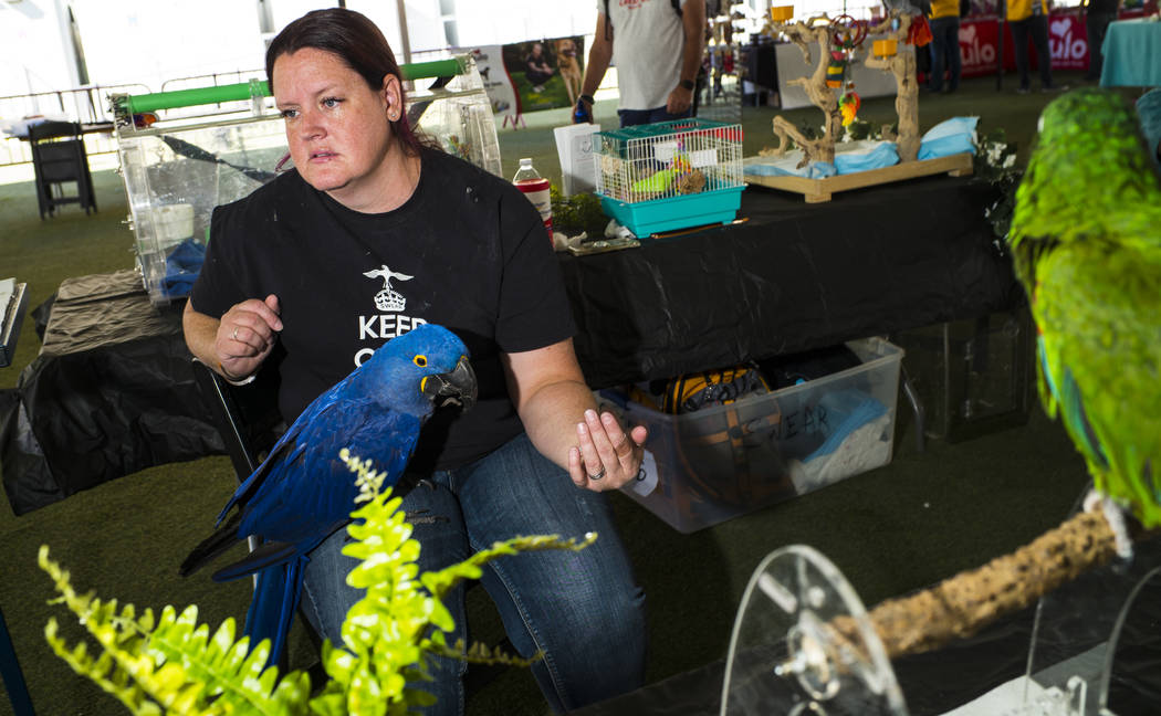 Skye Marsh, of SouthWest Exotic Avian Rescue, talks about fostering parrots and other exotic bi ...