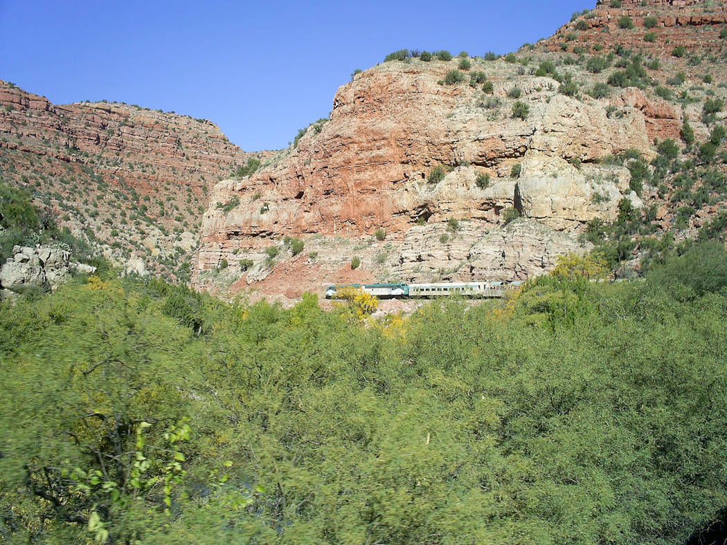 The Verde River supports a wide variety of Western wildlife, including javelinas, antelope, dee ...