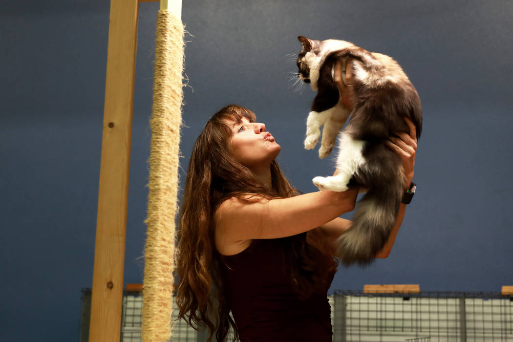Debbie Prince judges a kitten during the March Madness Cat Show at the Henderson Multigeneratio ...