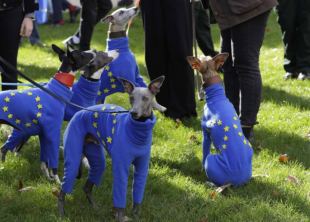 Whippets wear clothing with the EU flag during anti-Brexit protests in London, Saturday, Oct. 1 ...