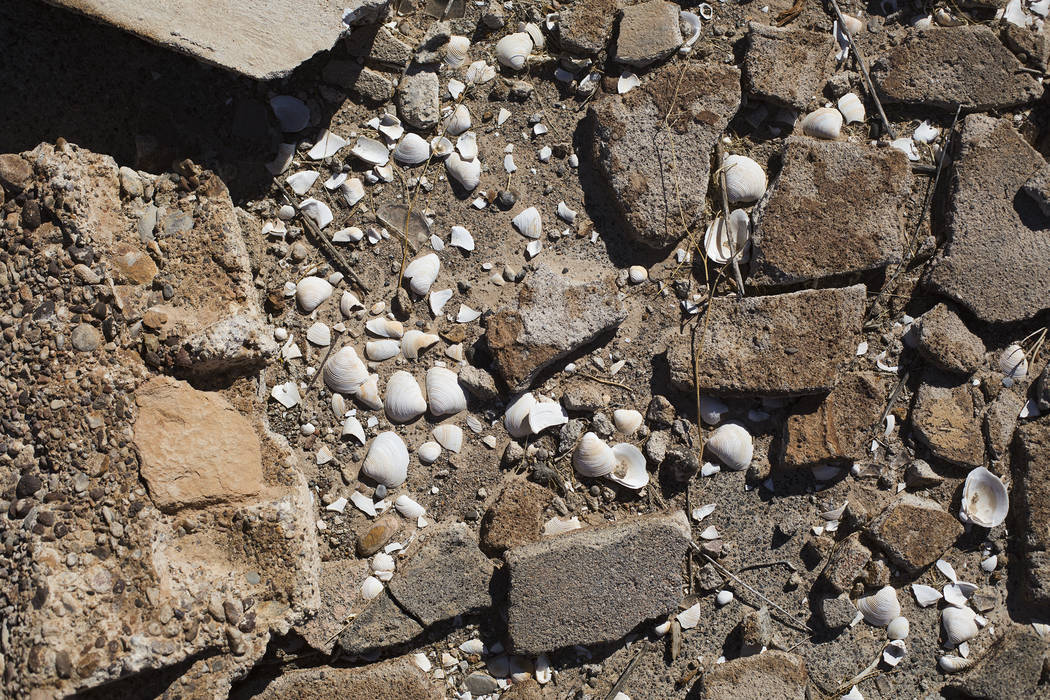 Seashells and debris on the ground in St. Thomas, in the Lake Mead National Recreation Area, Tu ...