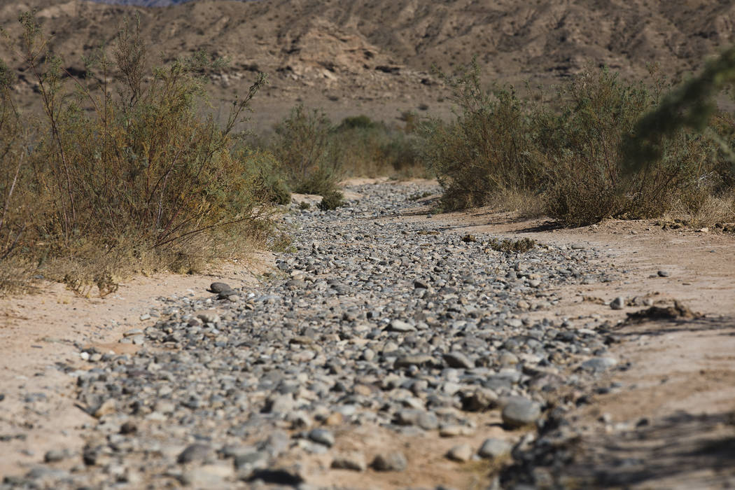 The former Muddy River in St. Thomas, in the Lake Mead National Recreation Area, Tuesday, Oct. ...