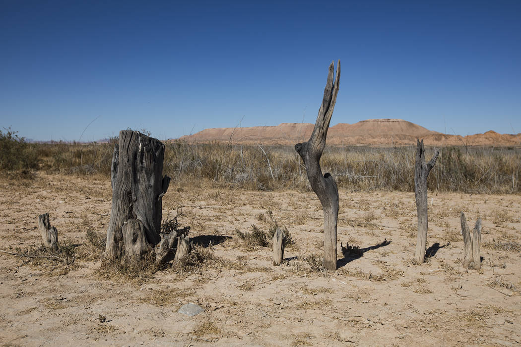 The stumps of trees that once lined the roads in St. Thomas, in the Lake Mead National Recreati ...