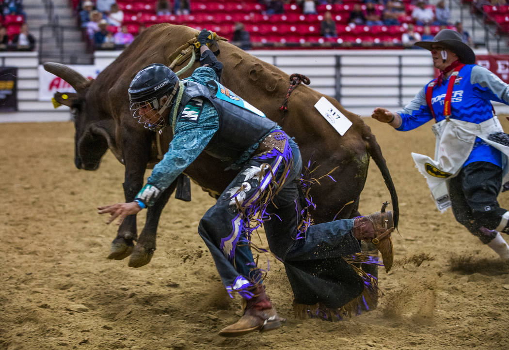 Bull rider Jaylen Baker is dragged around the ring attached to his bull after being thrown duri ...