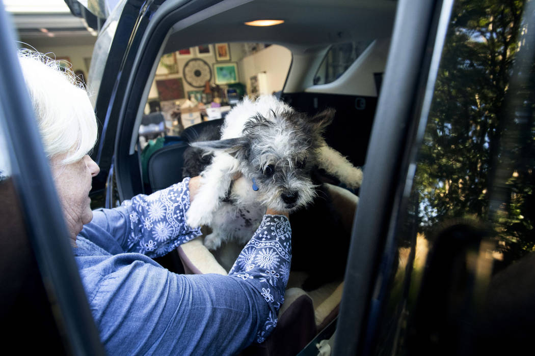 Sandy Beddow evacuates with her dog as a wildfire called the Kincade Fire burns nearby on Satur ...