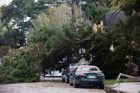 A tree lies on Camp Street by Henry Clay Avenue after a storm system called Tropical Storm Olga ...