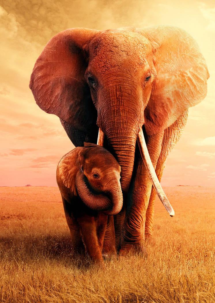 """The Elephant Queen"" premieres Nov. 1 on Apple TV+. (Apple)"