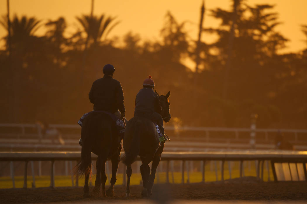 Horses warm up in the early morning light at the Breeder's Cup horse races, Thursday, Oct. 31, ...