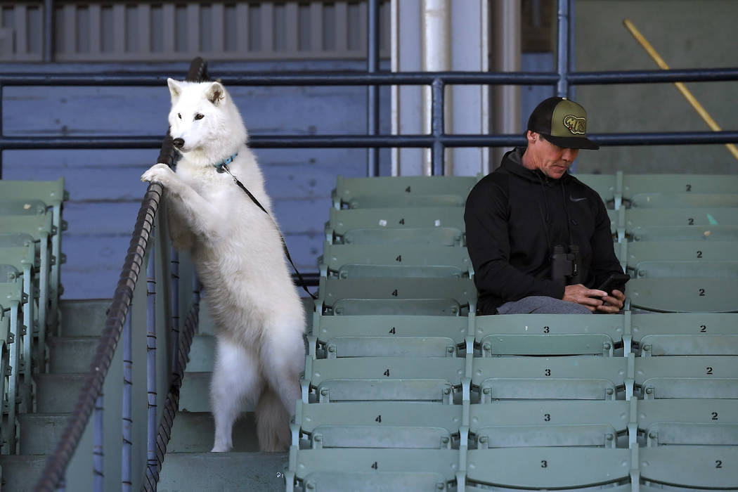 A dog and his owner sit in the stands during morning works out at Santa Anita Park for the Bree ...
