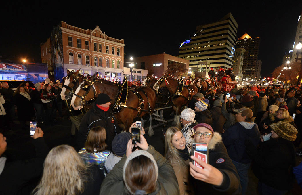 Budweiser's iconic Clydesdales walk in a procession, Wednesday, Oct. 30, 2019, in Salt Lake Cit ...