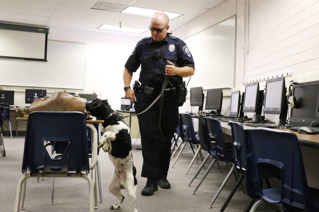 Clark County School District K-9 officer Joe Cordsen watches as his dog Jack tries to locate hi ...