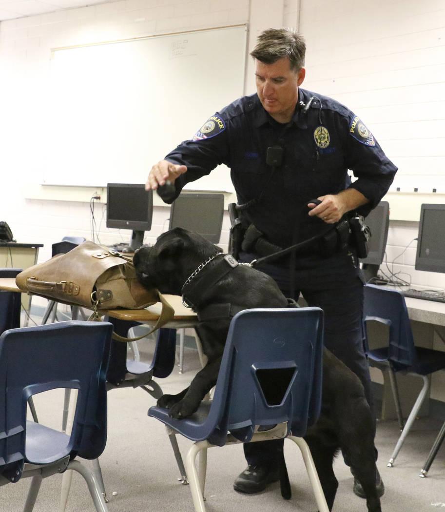 Clark County School District K-9 officer James Harris watches as his dog Ziggy locates hidden w ...