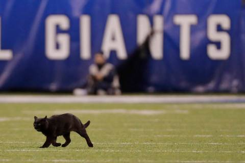 A cat runs on the field during the second quarter of an NFL football game between the New York ...
