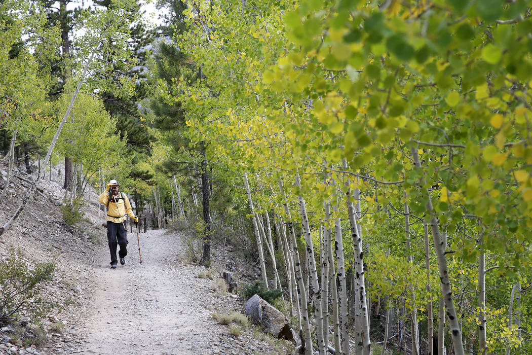 David Wignall, 72, of Las Vegas hikes on the Bristlecone Trail in Lee Canyon on Mount Charlesto ...