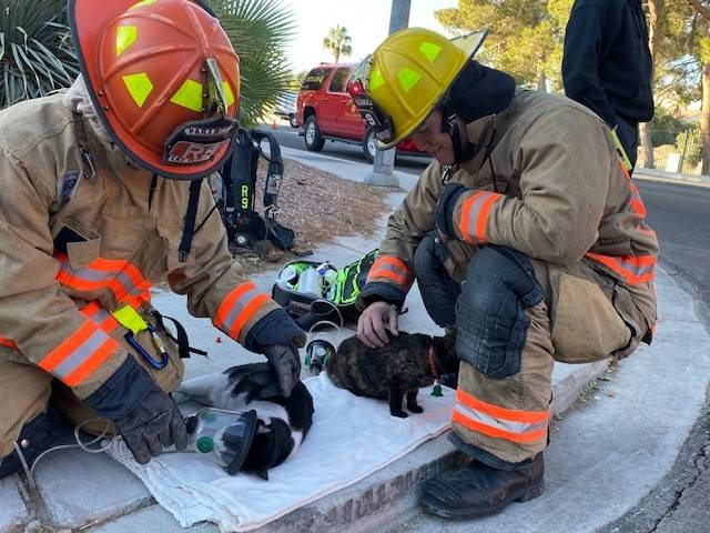 Las Vegas firefighters Christopher Hyink and Toby Brown give oxygen to two cats rescued from a ...