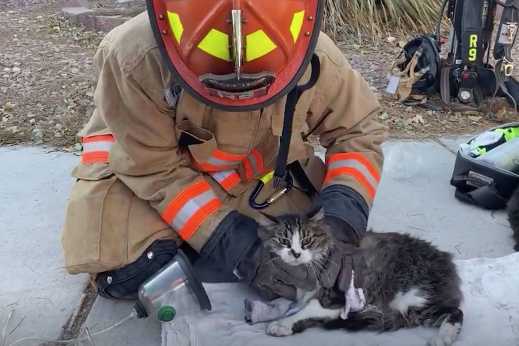 This screenshot shows a Las Vegas firefighter gives oxygen to a cat rescued from a northwest La ...