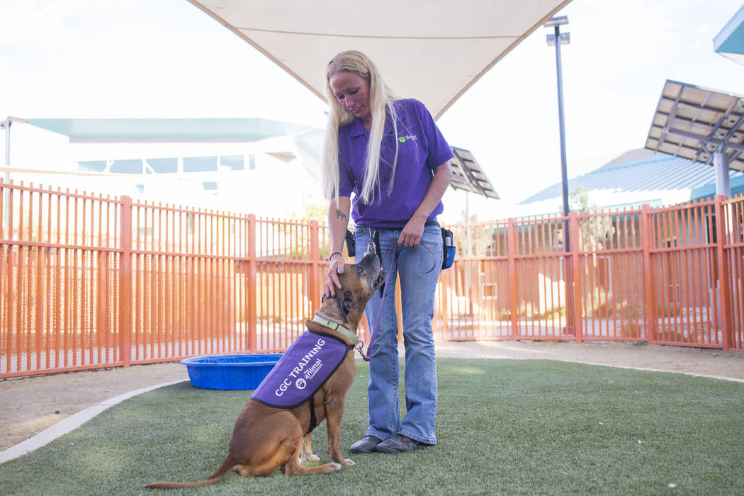 Nicole Fox, an enrichment specialist for the Animal Foundation, trains Louie, an eight-year-old ...