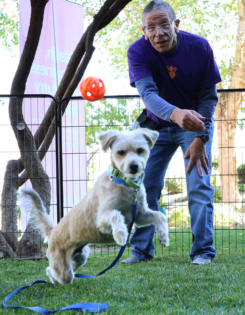 Mike D'Amore, a volunteer at the Animal Foundation, plays with Max, a Terrier Mix, at Dignity H ...
