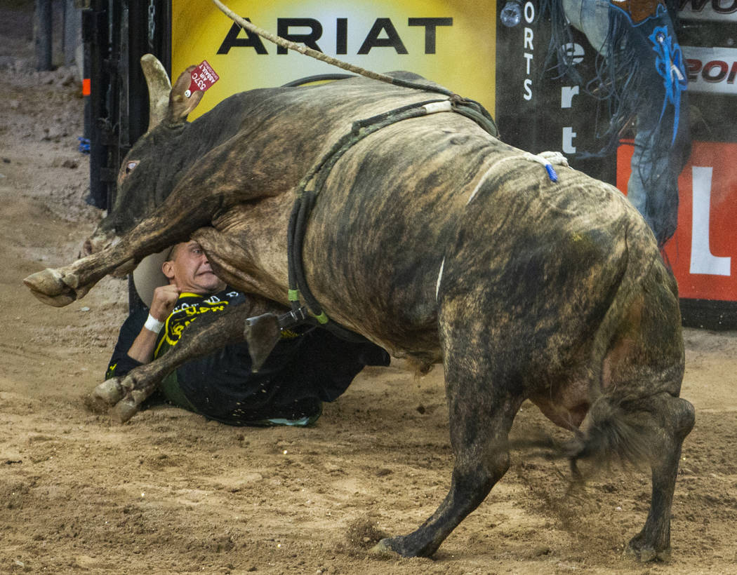 A bullfighter is down and gets the horn of a bull during the third day of the PBR World Finals ...