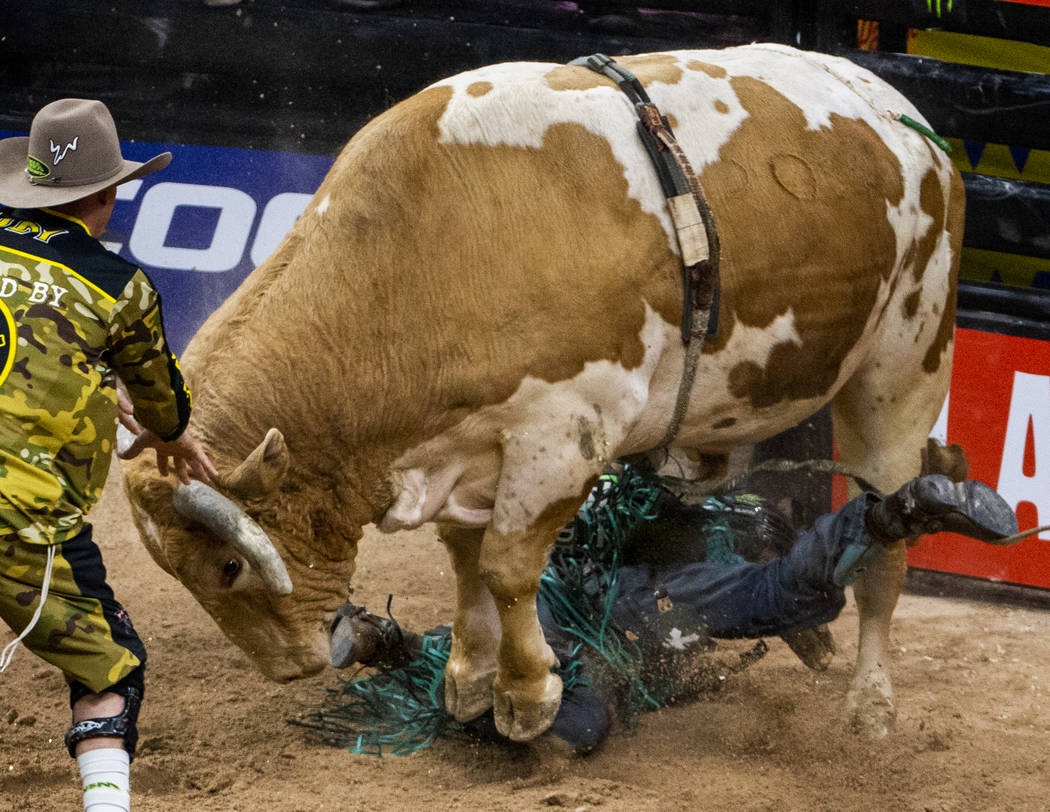 Leandro Machado gets stomped underneath of Nailed during the last day of the PBR World Finals a ...