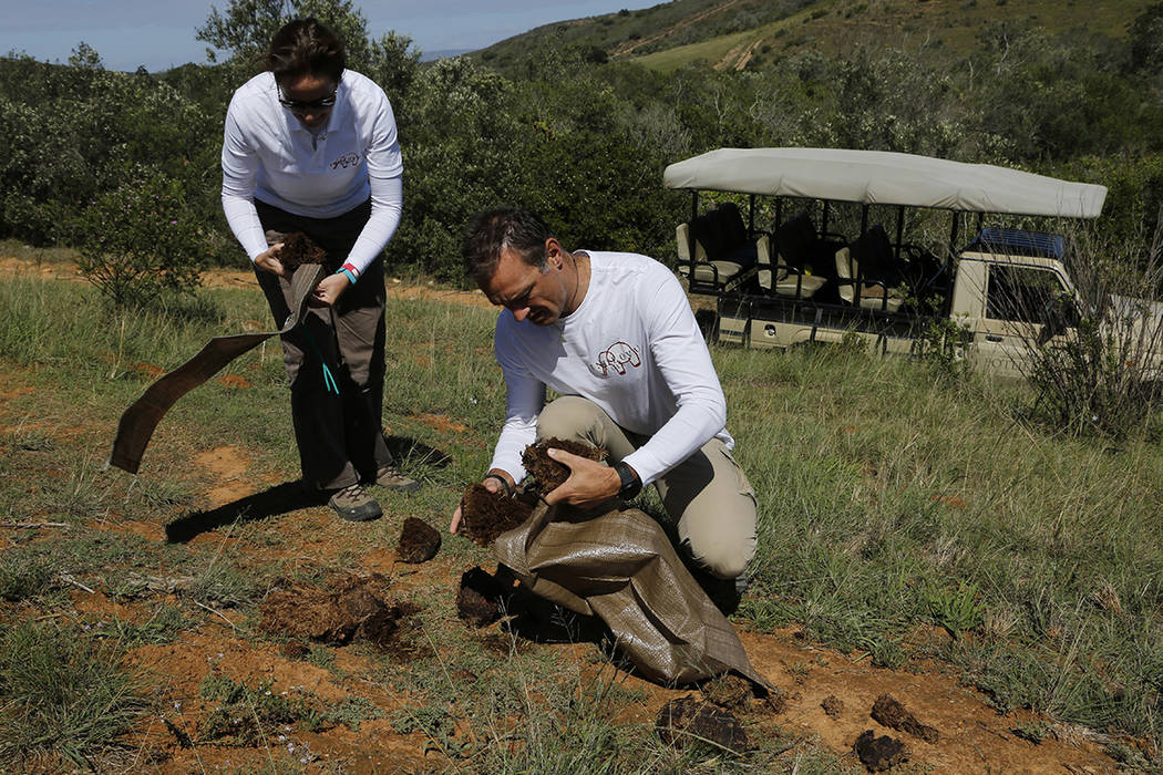 Husband and wife team Paula, left, and Les Ansley, right, collect fresh elephant dung in the Bo ...