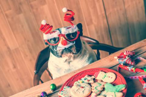 Dog with Christmas glasses on a table with cookies and Christmas objects. (Getty Images)