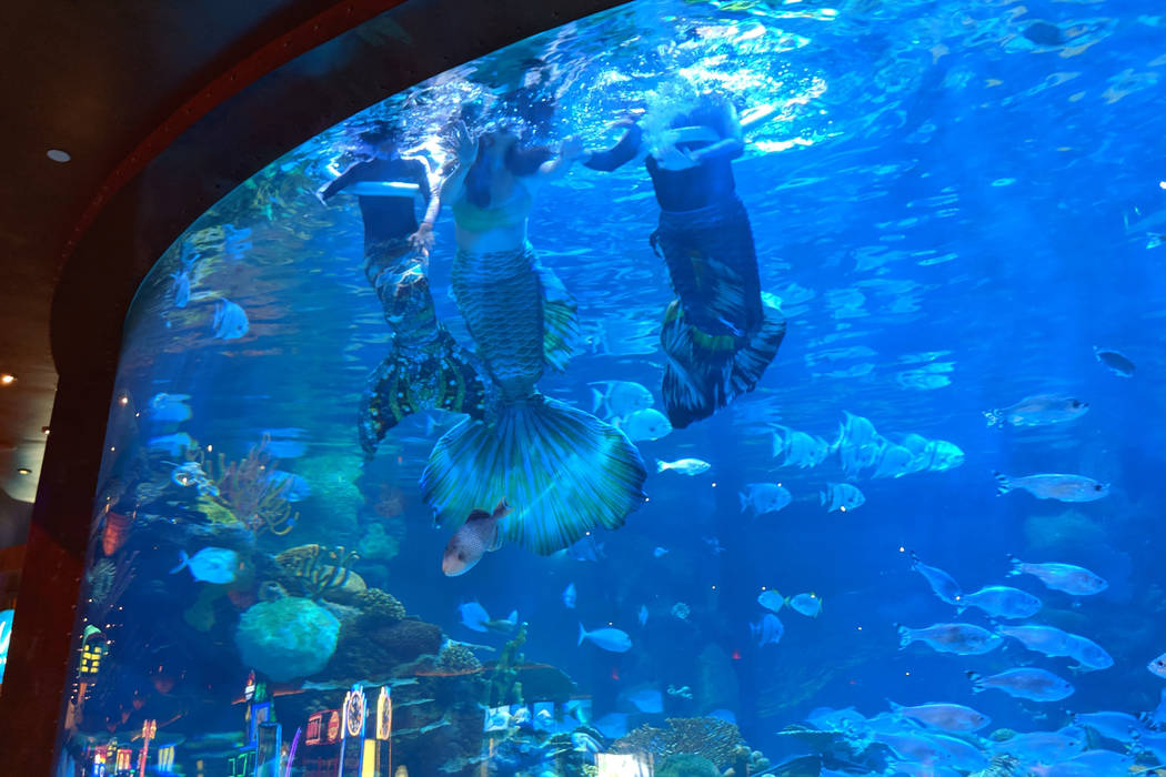 A Mermaid School lesson at Silverton's aquarium is seen from below. (Stacy D'Alessandro)