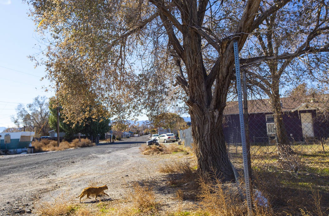 A cat passes by in a residential area of Wendover, Utah, on Wednesday, Nov. 6, 2019. (Chase Ste ...