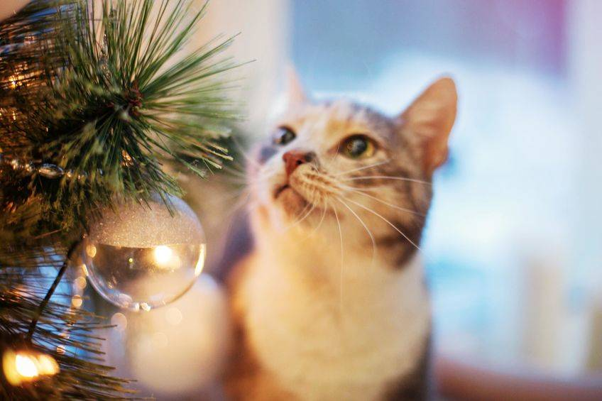 Secure ornaments to tree with twist ties or move decorations up and out of the reach of paws, t ...