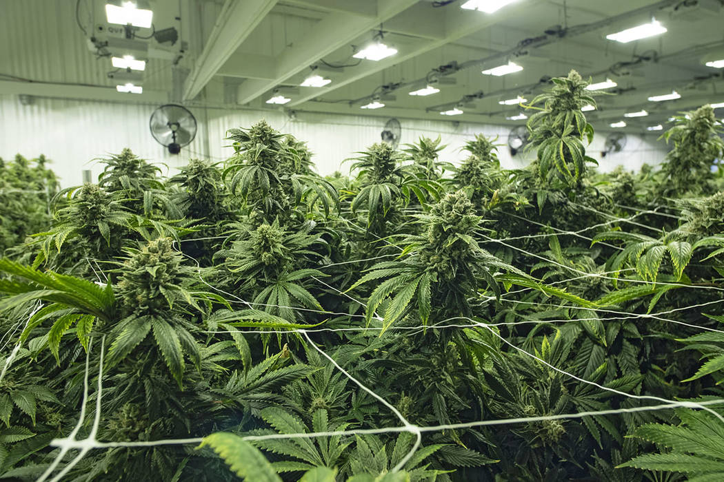 Las Vegas man gets 5 years in prison on pot-related charge