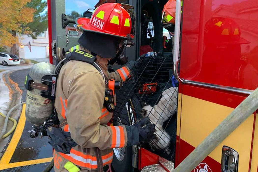 A Las Vegas Fire Department firefighter helps two cats after an attic fire in the northwest val ...