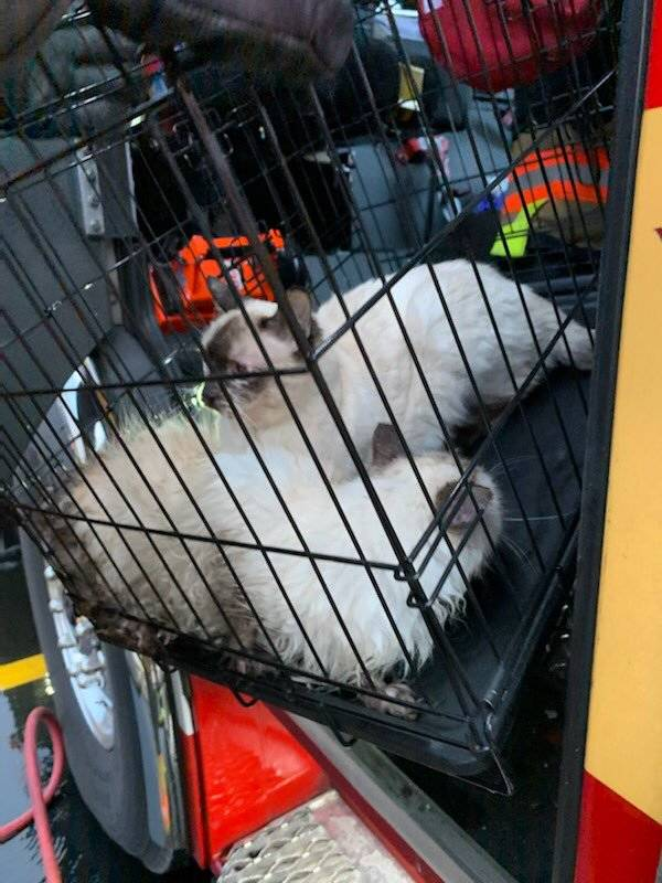 Two cats that were rescued as Las Vegas Fire Department crews battled an attic fire in the nort ...