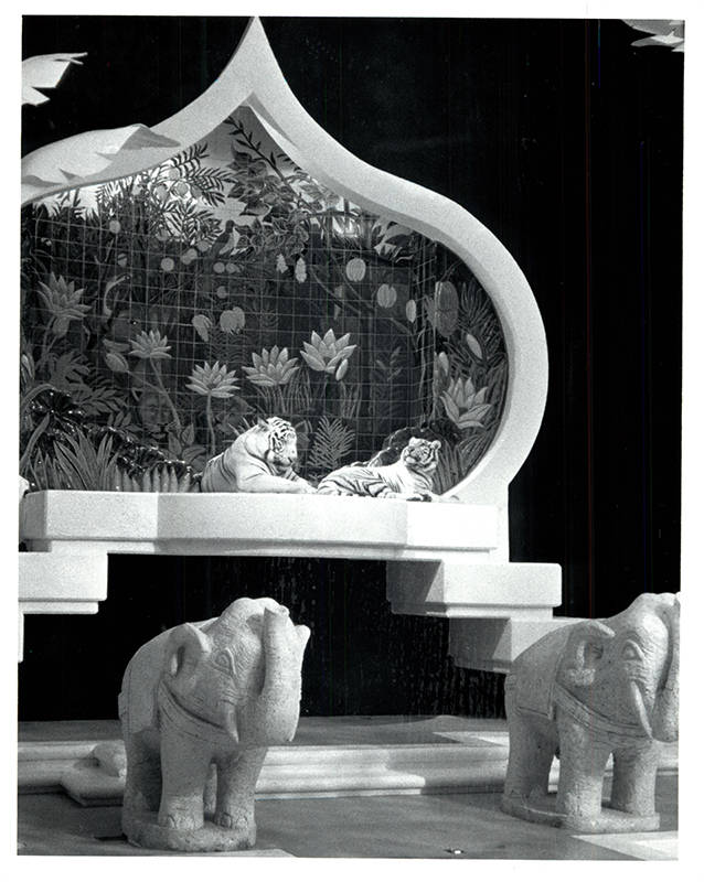 White tigers in repose on their throne in their own habitat at The Mirage. (Wayne Kodey / Las V ...