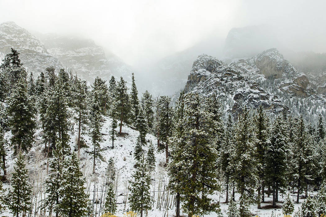 Snow begins to dust the trees in Lee Canyon at Mt. Charleston on Wednesday, Nov. 20, 2019. (L.E ...