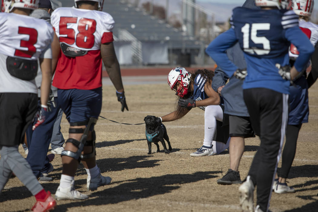 Liberty's strong safety Zyrus Fiaseu (30) pets head coach Rich Muraco's pug Magnus during pract ...