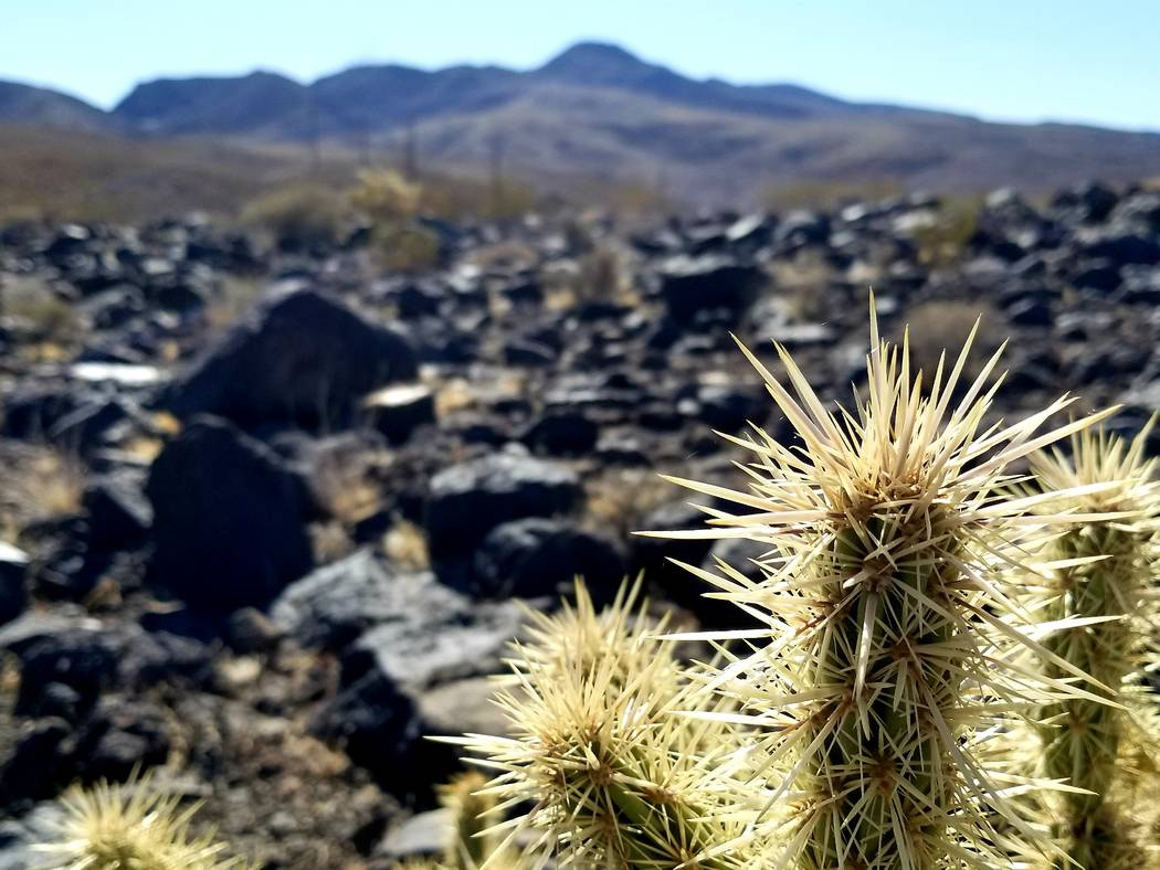 Fire and spikes: ancient volcanic rock and cholla cactus are two sure finds along the 8-mile Mc ...