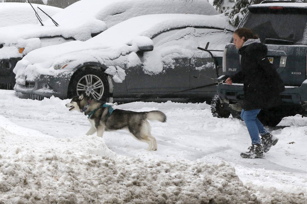 A woman walks her dog in the snow after an overnight snowfall, Monday, Dec. 2, 2019, in Marlbor ...