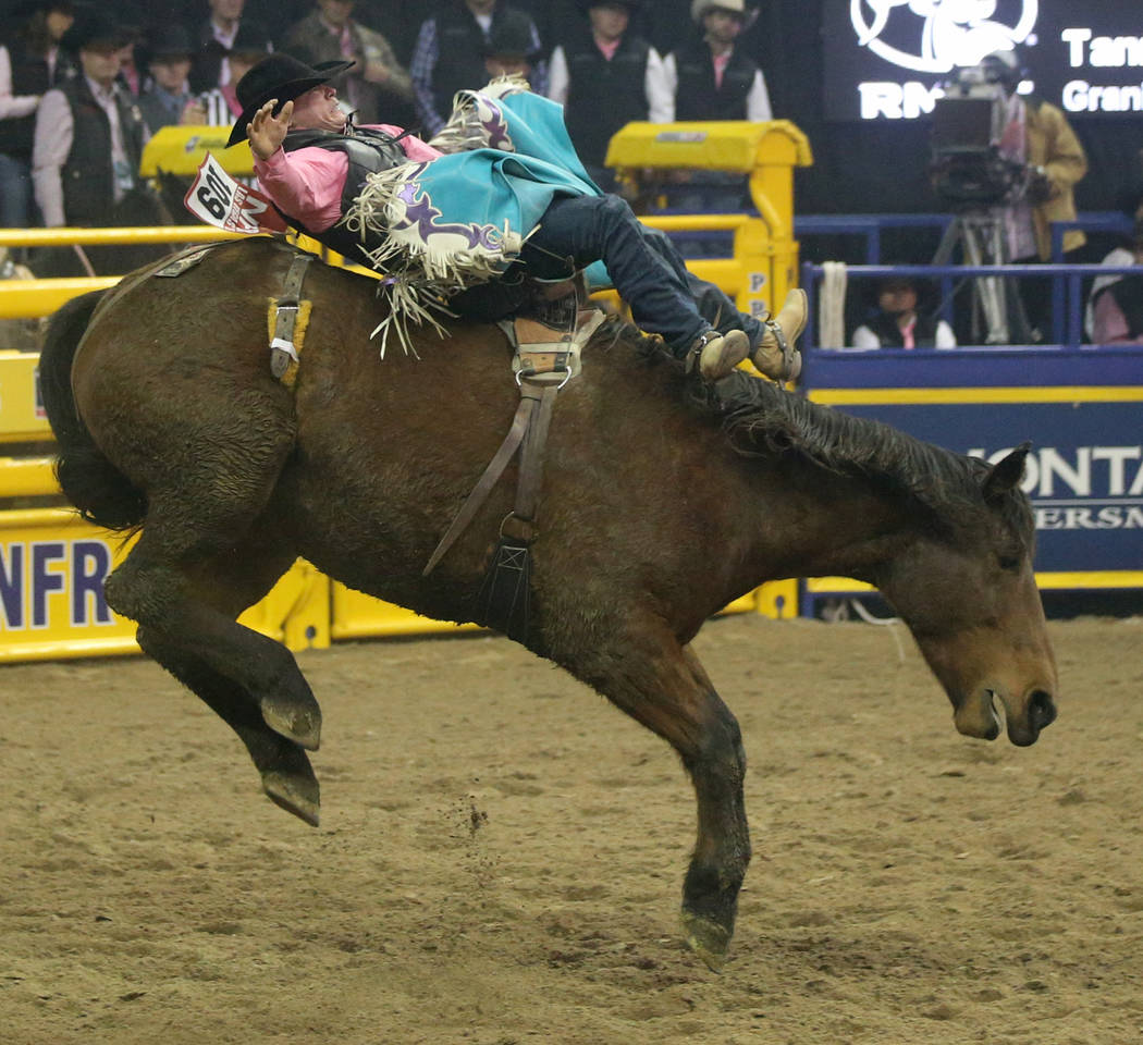 Tanner Aus of Granite Falls, Minn. rides Weenie in the bareback competition during the fifth go ...
