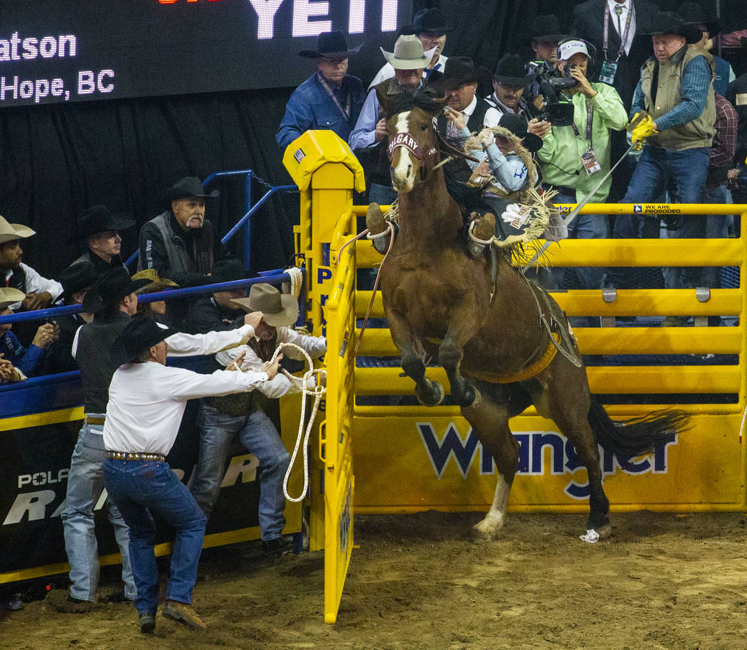 Jake Watson of Hudson Hope, British Columbia, gets up on Xena Warrior while still in the stall ...