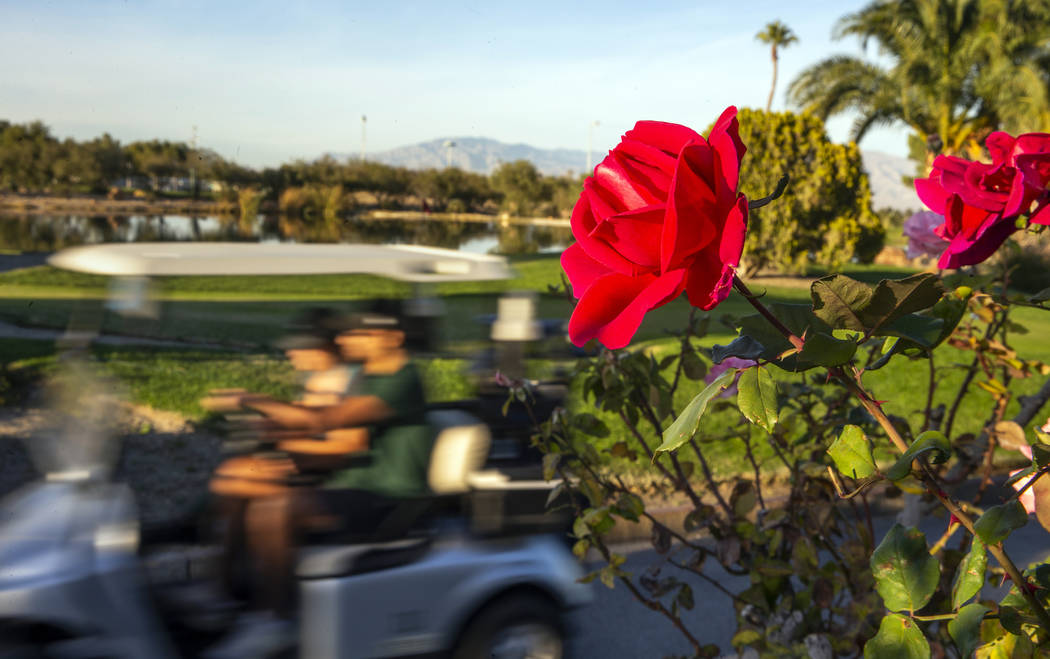 Golfers ride by the practice area adjacent to the clubhouse on the Palm Course at the Angel Par ...