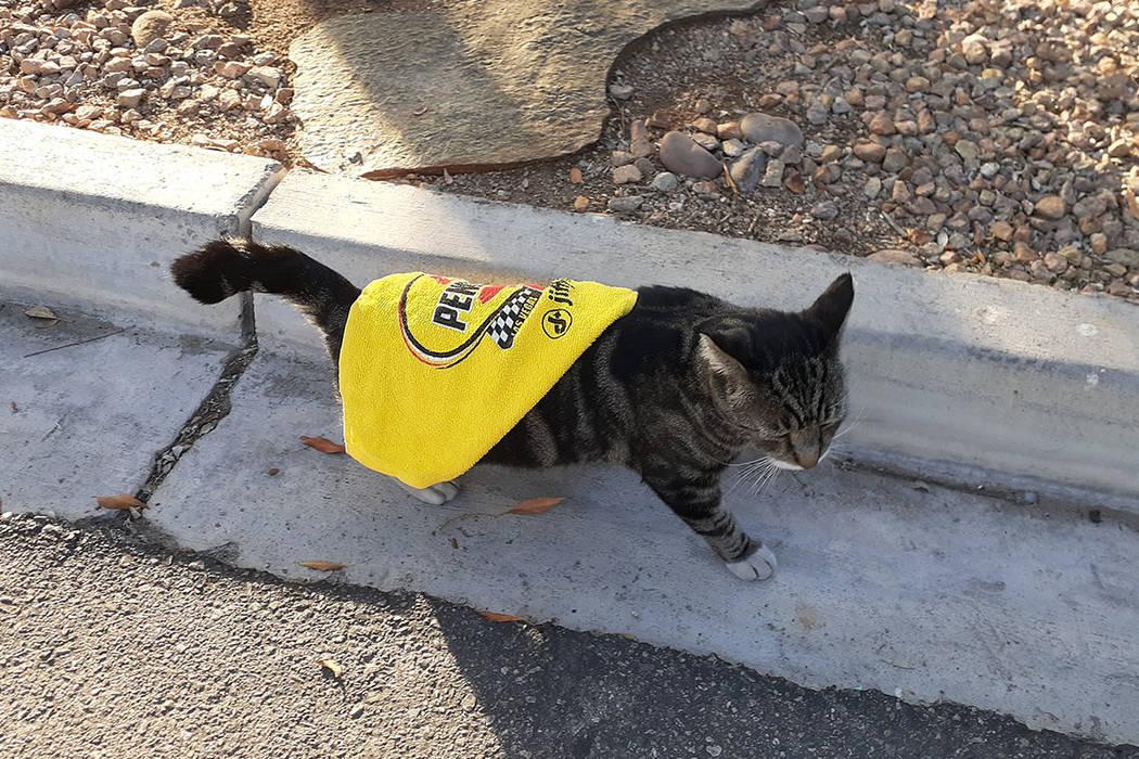 RJ the RJ Cat sports his poncho Thursday, Dec. 12, 2019, in Las Vegas. (Tony Garcia/Las Vegas R ...