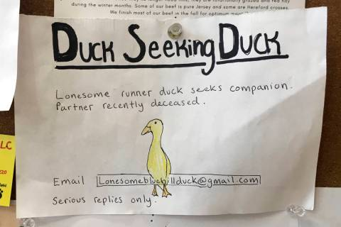 An advertisement for a single duck seeking a partner is seen on a bulletin board at the Blue Hi ...